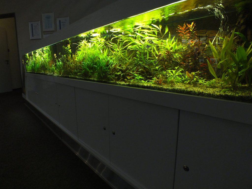 Aquarienpflegedienst Aquarienservice Aquarienvermietung Aquarium-Pflegedienst Komplettservice Berlin Pflegedienst Aquarium Service Aquarium Vermietung Aquariumpflege Aquarienpflege