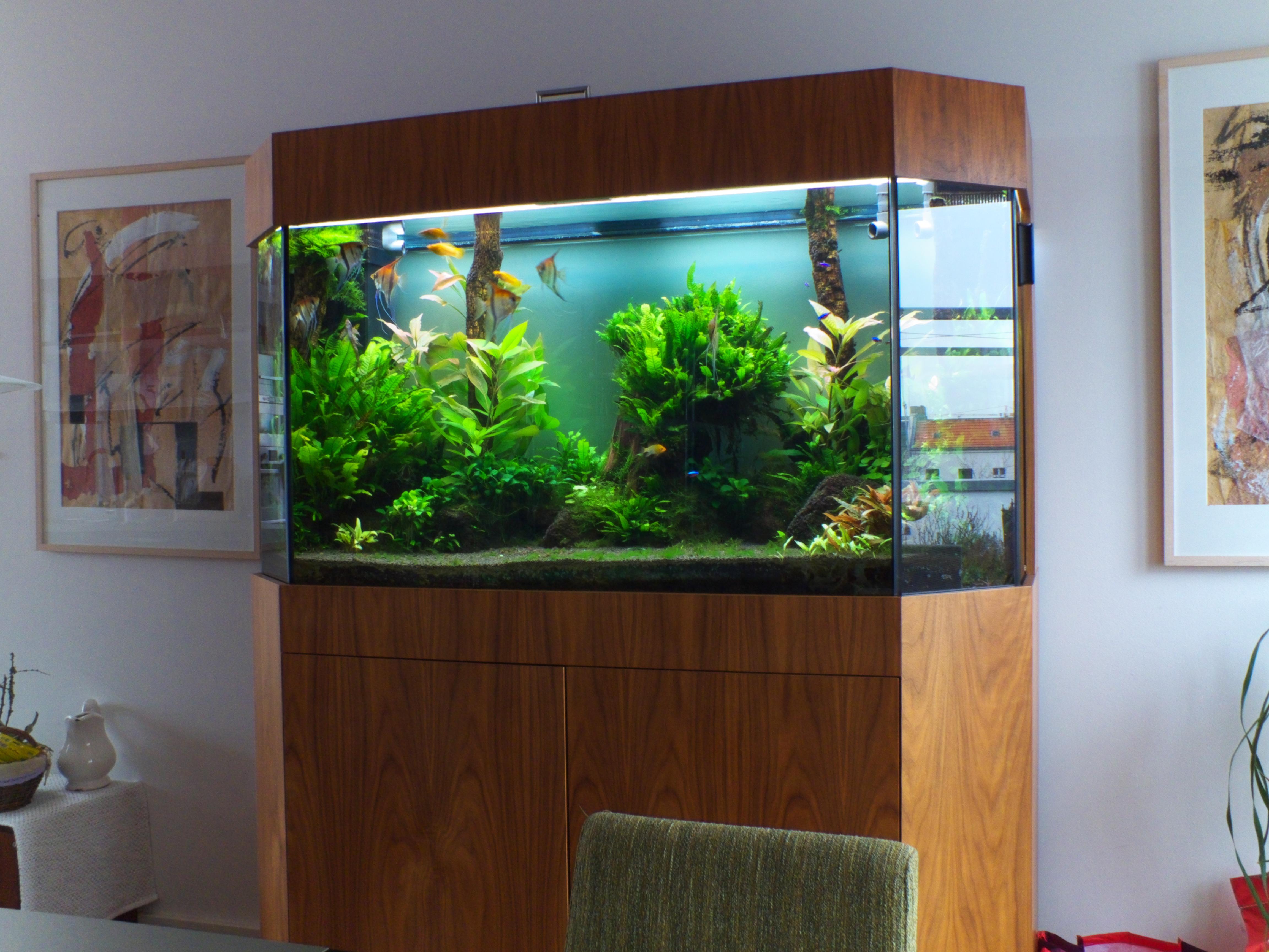 premium aquarium aquarienpflege berlin naturkonzepte design. Black Bedroom Furniture Sets. Home Design Ideas