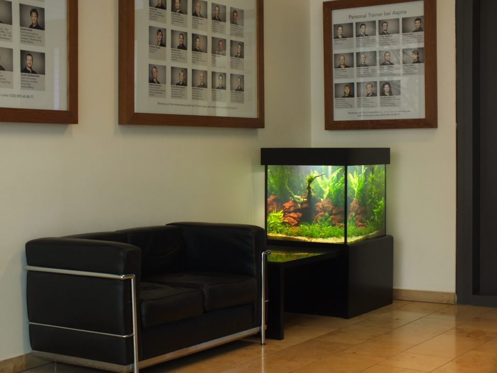 Aqua Scaping, aquascaping, Aquarium Wartung, Aquariumdesign, Aquarienpflege, Aquarium