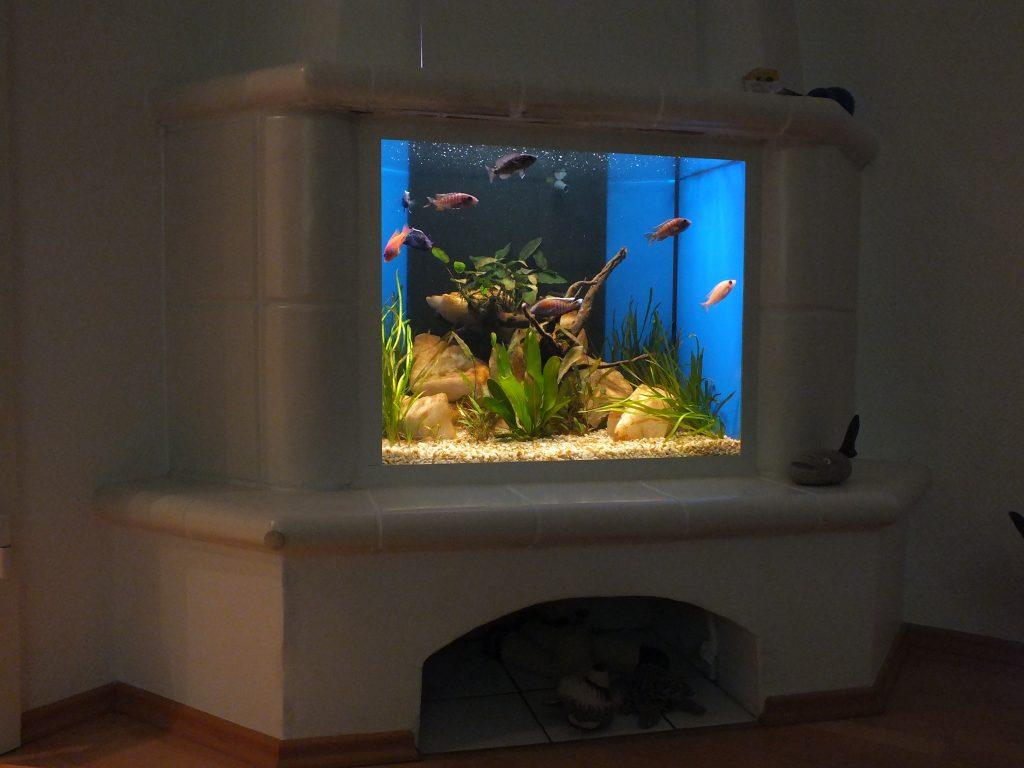 Premiun Aquarium, Aquarienbau, Aquarienpflege, Aqaurienvermietung, Aquarienpflege
