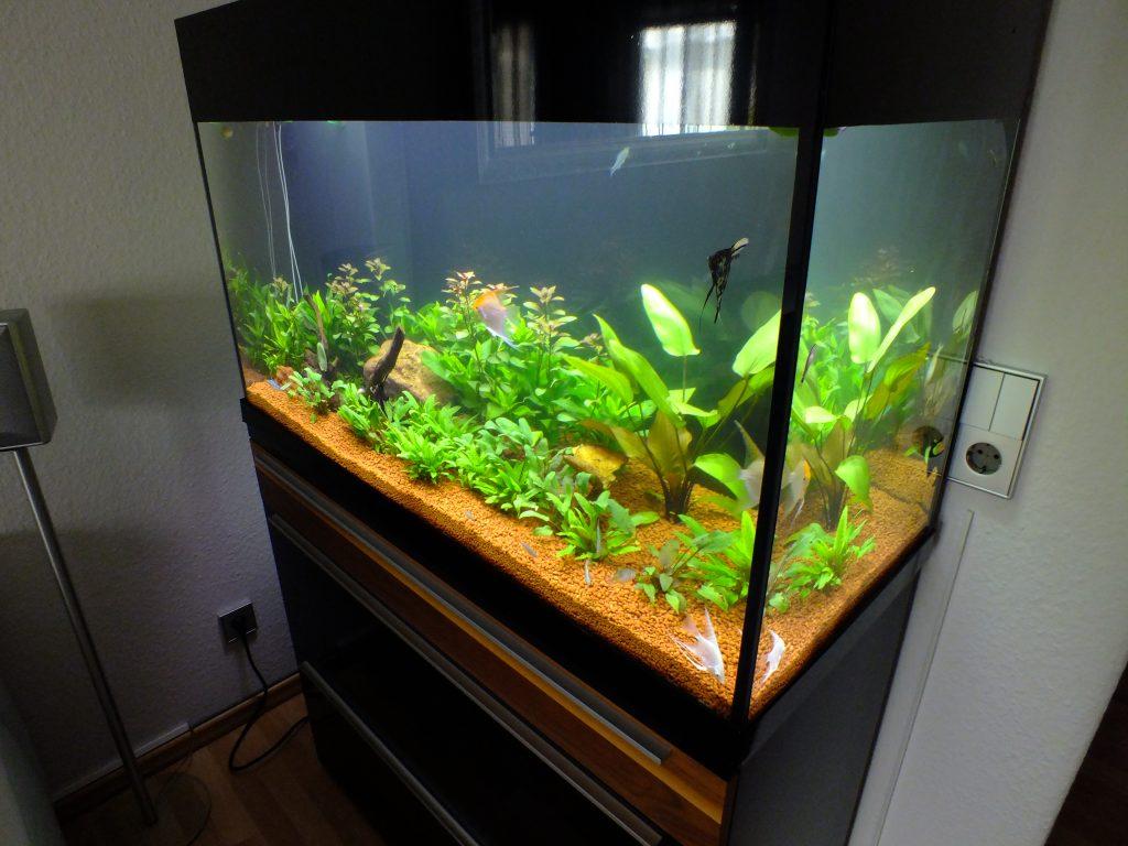 Design Aquarium, Aquariumpflege, Aquarienbau, Aquarienanlagenbau, Pflegeservice