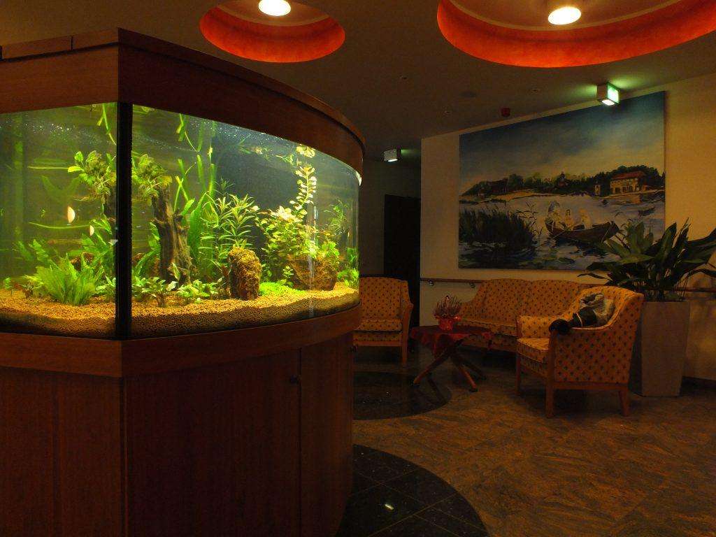 Design Aquarium, Aquarium gewölbt, Premium Aquarium, Aquarienpflege