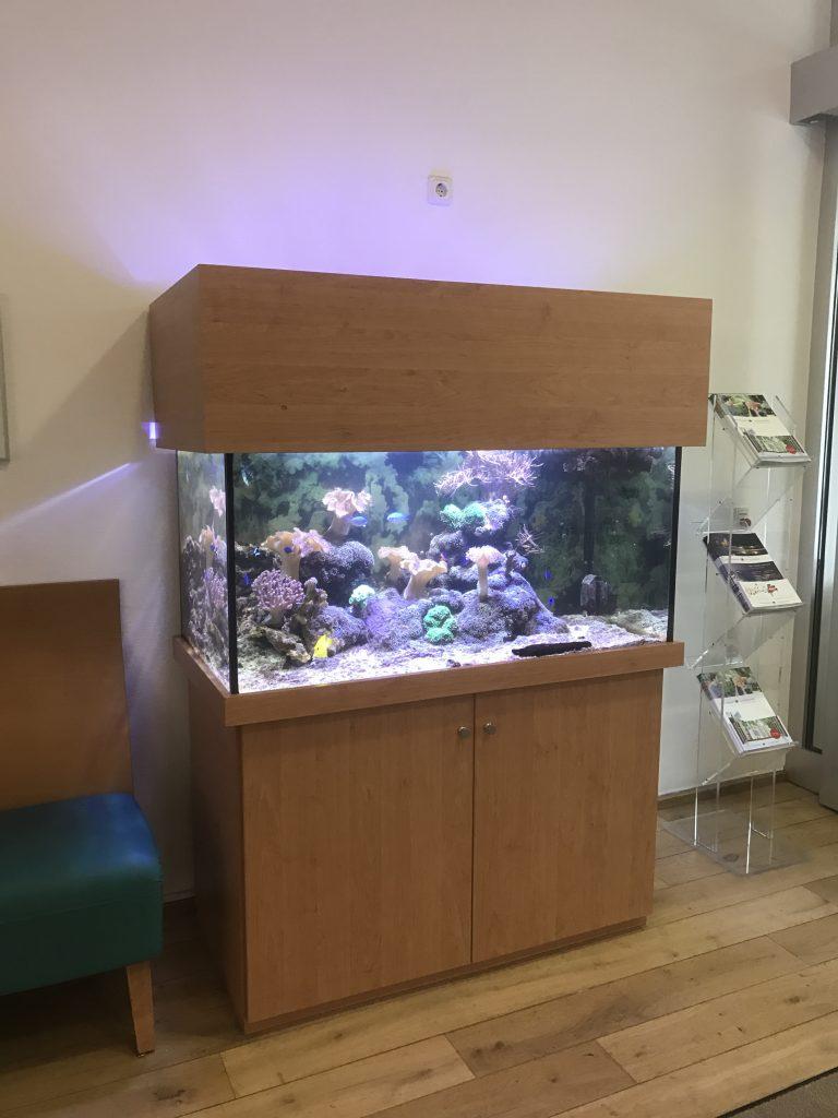 Aquarienverkauf, Aquarienwartung, Aqauarienpflege, Meerwasser, Premiumaquaristik, Premiumaquarium