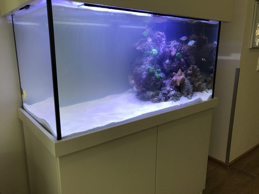 Premiumaquarium Designaquarium Meerwasseraquarium Aquariumwartung Aquarienpflege