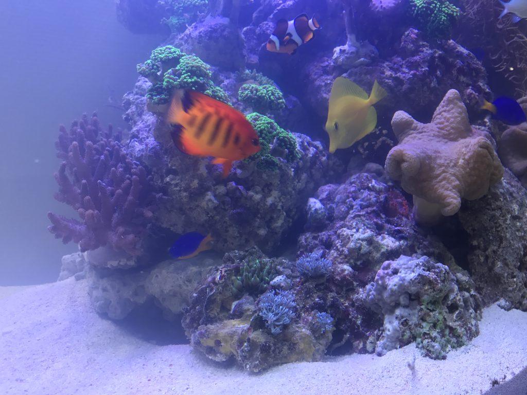 Designaquarium Premiumaquarium Meerwasseraquarium Aquariumwartung Aquarienwartung