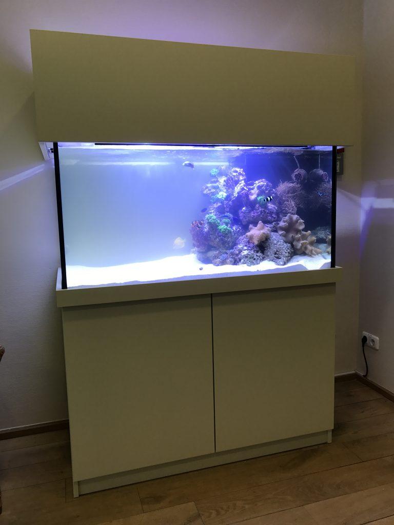 Premiumaquarium Meerwasseraquarien Aquariumwartung Aquarienwartung