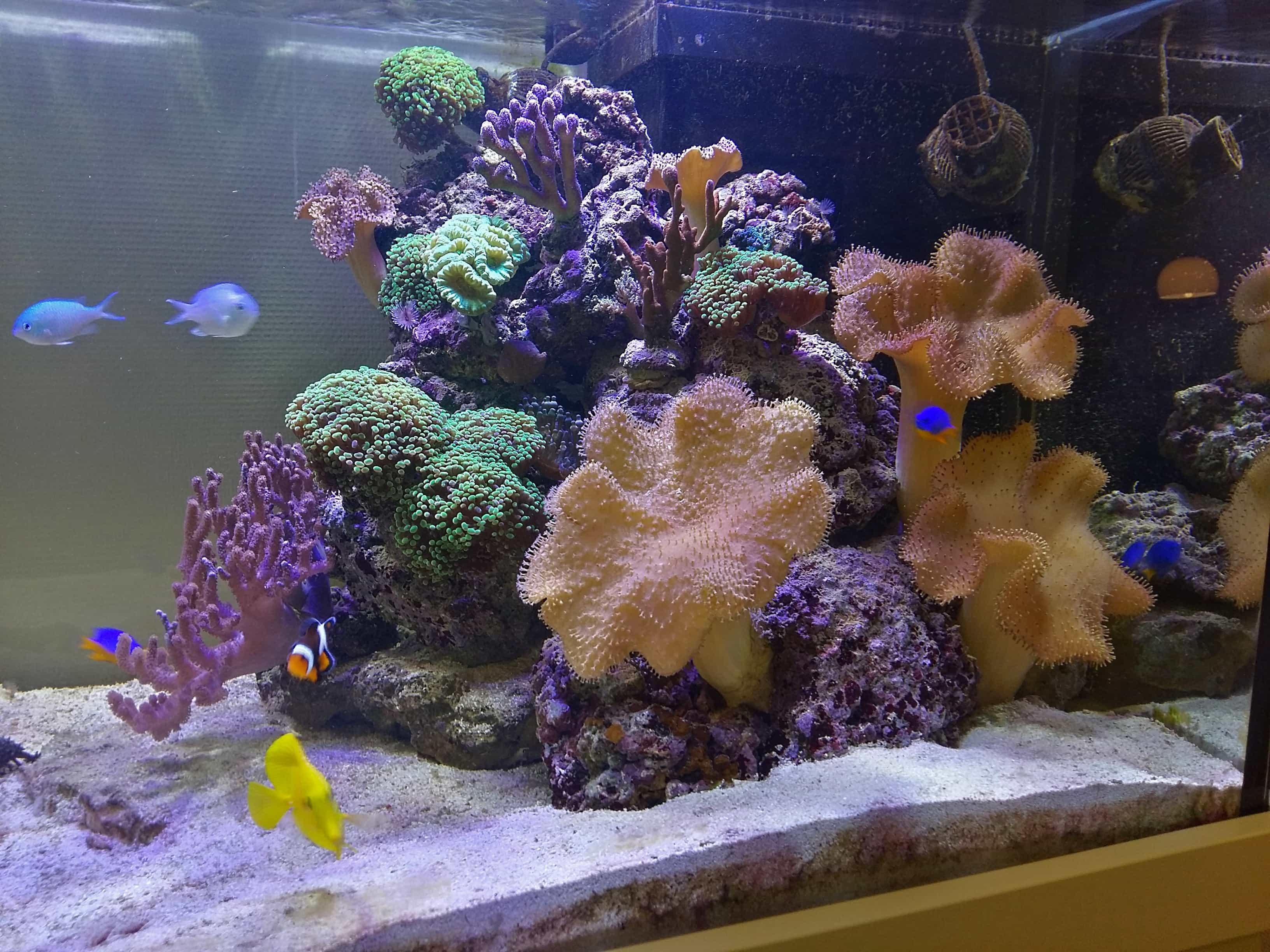 Meerwasseraquarium 500