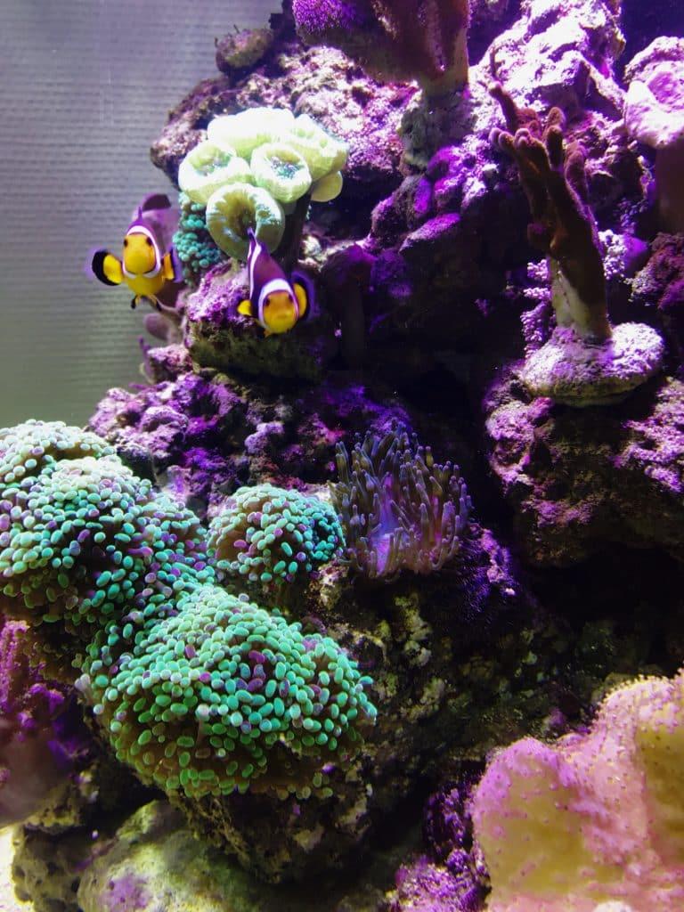 Aquarienbau, Aquarienpflege, Aquariumwartung, Aquarium-Profi,