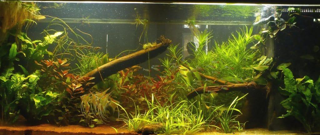 Meerwasseraquarium, Aquascaping vom Profi, Aquarienpflege, Aquarienwartung, Aquarienservice