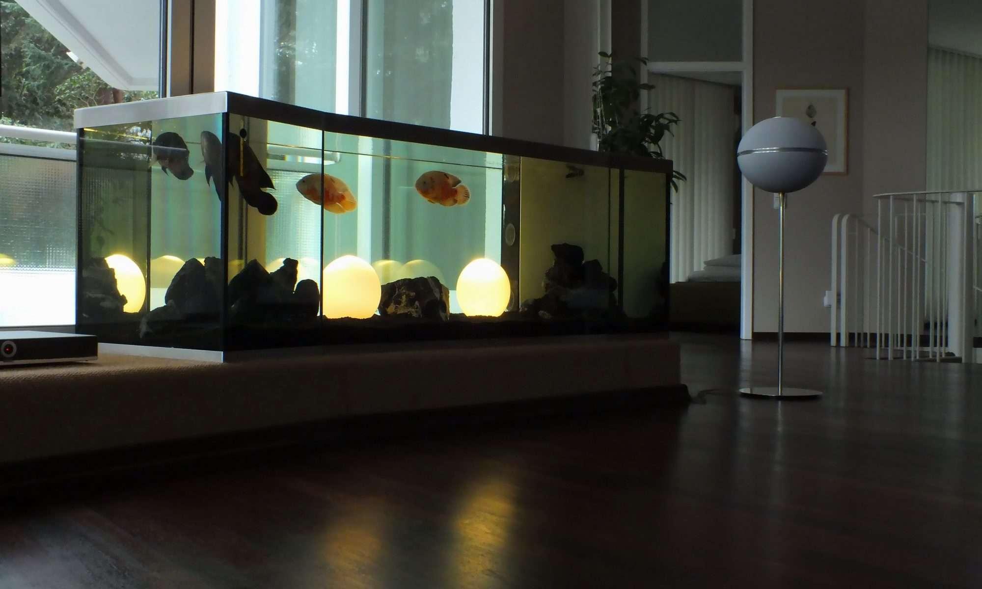 Das Aquarium im Haus