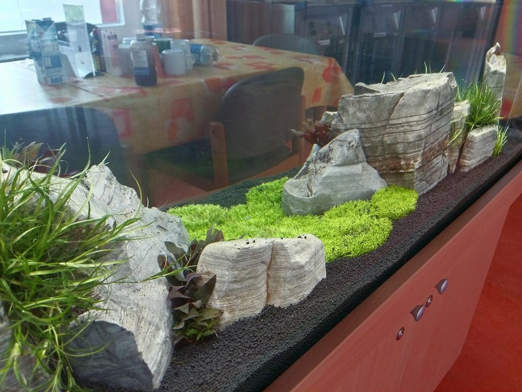 Aquascaping Berlin, Aquarienpflege, Aquariumwartung, Aquariumbau, Aquarienpflege