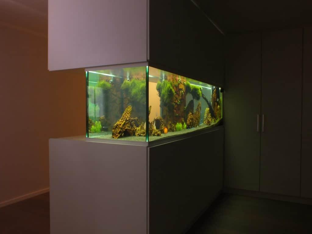 Diskusaquarium, Aquariumbau, Vor Ort Aquarienbau, Aquariumwartung, Aqua Service, Premiumaquarium, Amazonas, Aquascaping