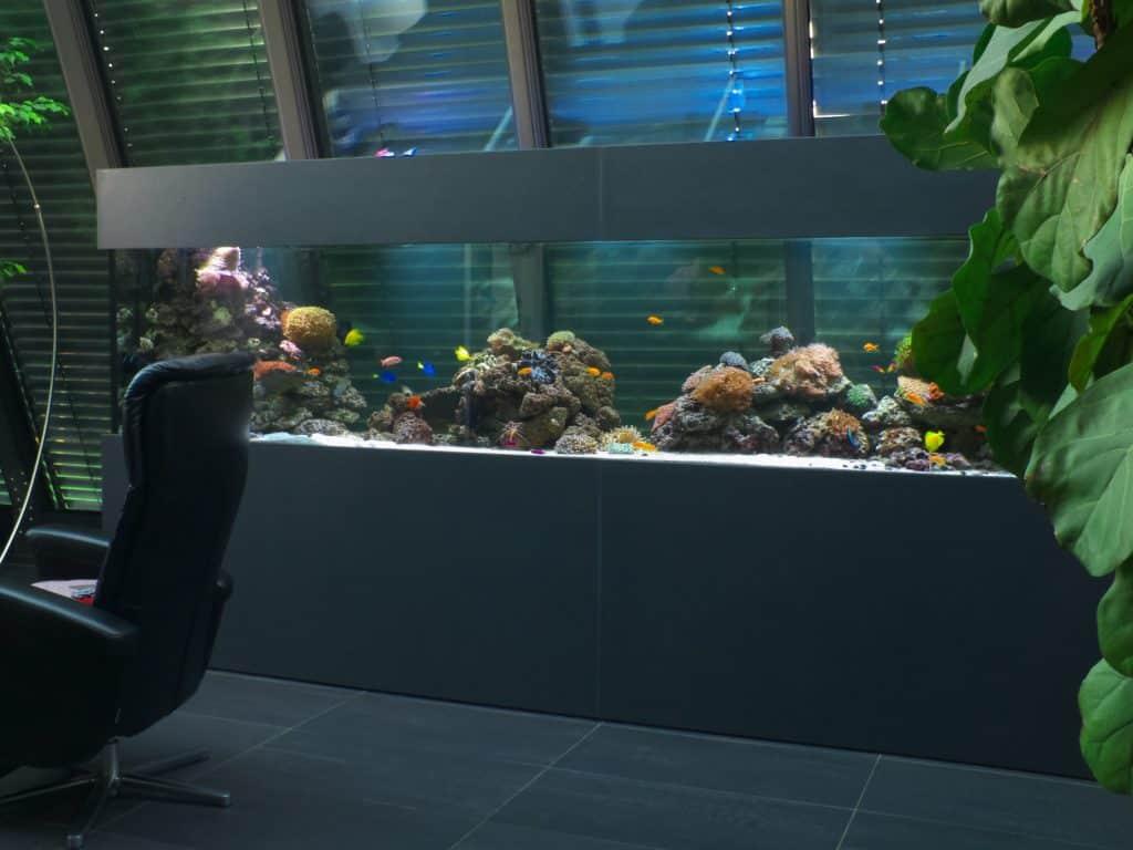 2500 Liter Premium Aquarium