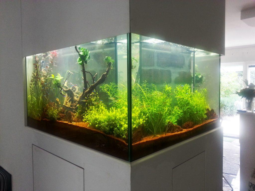 Beliebt Premium Aquarium Aquarienpflege Berlin - Naturkonzepte & Design OY25
